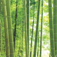 http://cdn.bydleni.com/img/2005/clanky/albums/userpics/10001/thumb_abrasiv_bambus.jpg