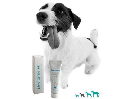 Soutěž o veterinární přípravky pro psy a tričko Aktivní zvíře
