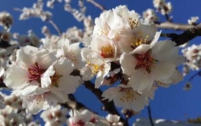 Soutěž: Jaro v květu