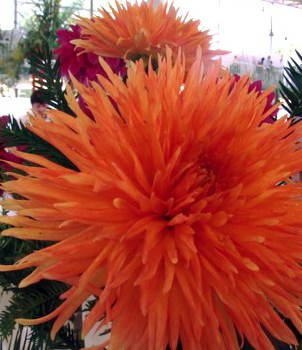 http://cdn.bydleni.com/rimport/img/0907/thumb_jirinky_flora.jpg