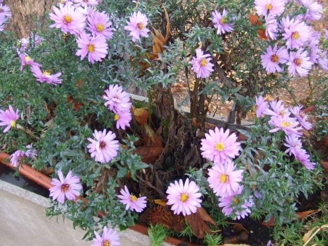 http://cdn.bydleni.com/rimport/img/2012_09/thumb_kvetiny_truhliky.jpg