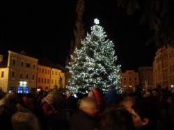 Jak na výběr vánočního stromku