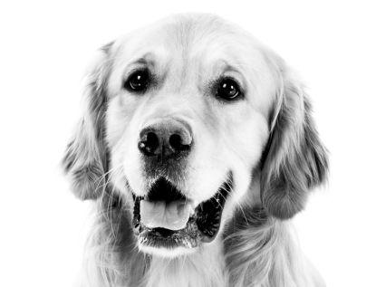 Soutěž o kloubní výživu pro psy Geloren dog