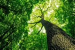 Úklid ekologicky
