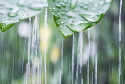 S promyšleným dešťovým programem šetříte peníze i životní prostředí
