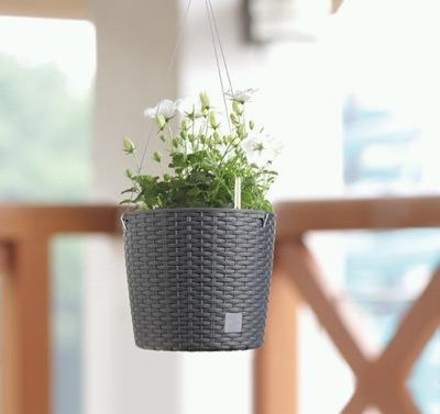 Kam s rostlinami? Můžete je pěstovat v závěsech, aeráriích i na dekorativních stolcích