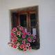 Květinová výzdoba patří k létu