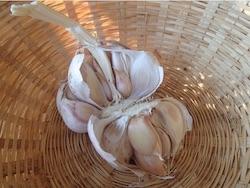 Česnek je zelenina, léčivá rostlina i prastaré koření