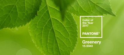 Osvěžující zelená - taková je barva roku 2017