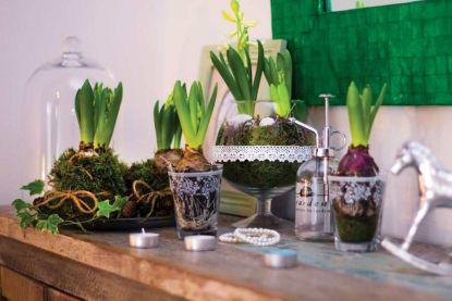 Vytvořte si jarní aranžmá s hyacinty