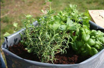 Pěstujte si zeleninu, květiny a trávníky bezagrochemikálií