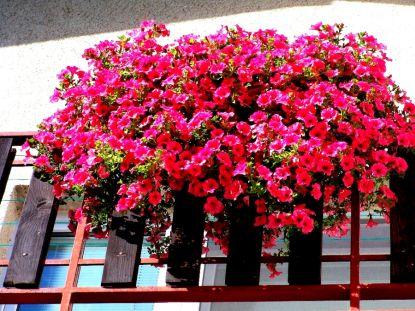 Vyhlášení vítězů soutěže Můj balkon