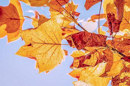 Soutěž: Barevný podzim