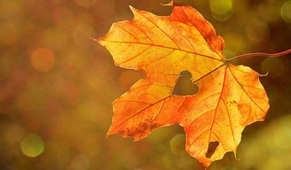 Vyhodnocení soutěže: Barevný podzim