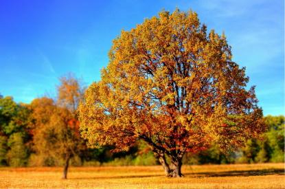 Vyfoťte podzim a vyhrajte