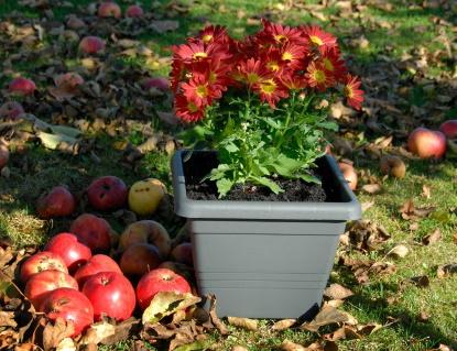 Soutěž o truhlíky pro podzimní parádění
