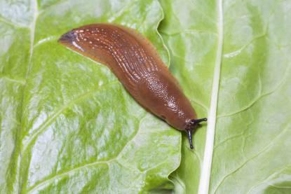 Pečujte o svou zahrádku ohleduplně, i se škůdci lze bojovat ekologicky šetrným způsobem
