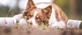 Soutěž o balíčky s konzervami BRIT pro psy