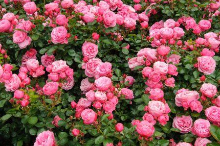 Půvabná rozkvetlá zahrada do naší krajiny patří