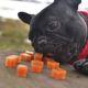 Pamlsky pro psy za odměnu, anebo pro zdraví?