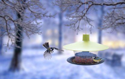Prostřete ptákům