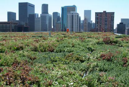 Ochladí dům i město. Využijte dotace na zelené střechy