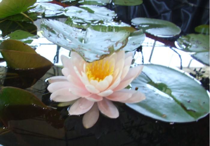 https://cdn.bydleni.com/rimport/img/0708/1/thumb_flora5.jpg