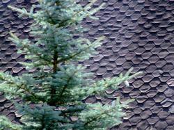 Jak chránit střechu před mechem