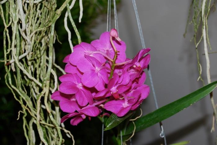 https://cdn.bydleni.com/rimport/img/2013_01/thumb_orchidea_f.jpg