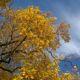 Proč je podzim barevný?