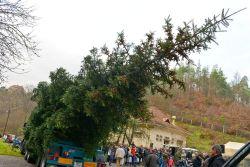Slavnostní předání stromu v Bílovicích u Brna