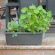 Samozavlažovací květináče se o rostliny postarají za vás