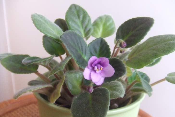 Jak vyhovět pokojovým rostlinám