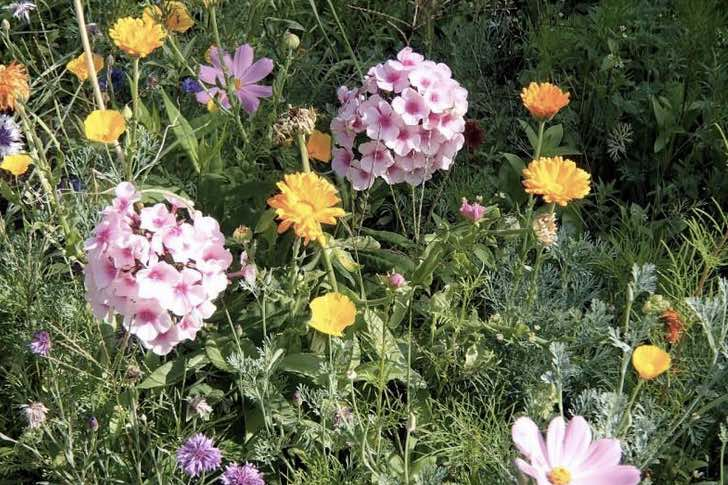 Právě kvetou: Lichořeřišnice, krásnoočko, rudbekie, floxy...