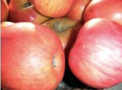 Dvě pochoutky s jablky