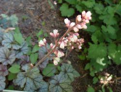 Jsou nenápadné, ale krásné, právě kvetou a můžeme je teď množit