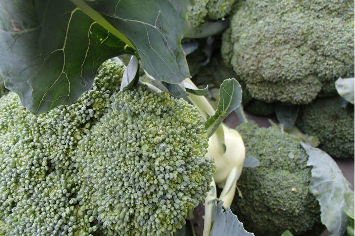 Brokolice je považována za bojovníka proti rakovině