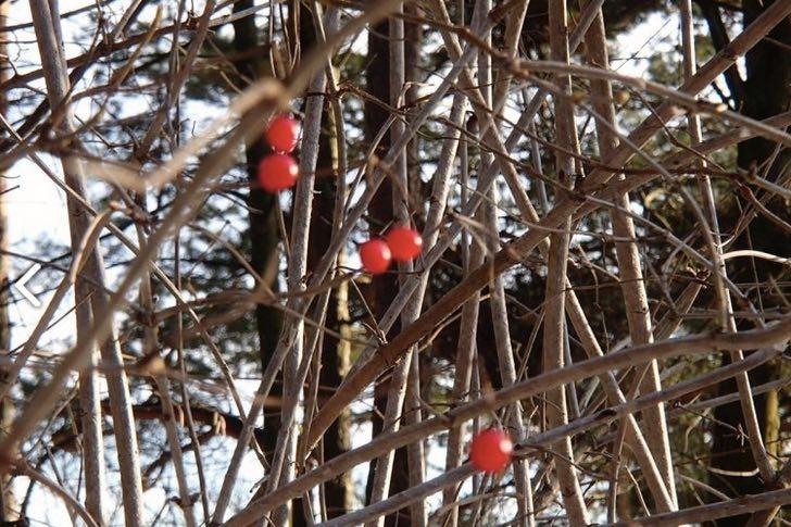 Zahradníkův blog: Prosinec