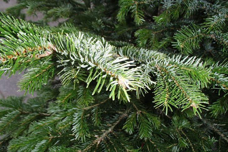 Čas vánočních stromků